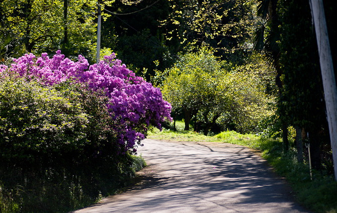 Грузія. Ботанічний сад Батумі.
