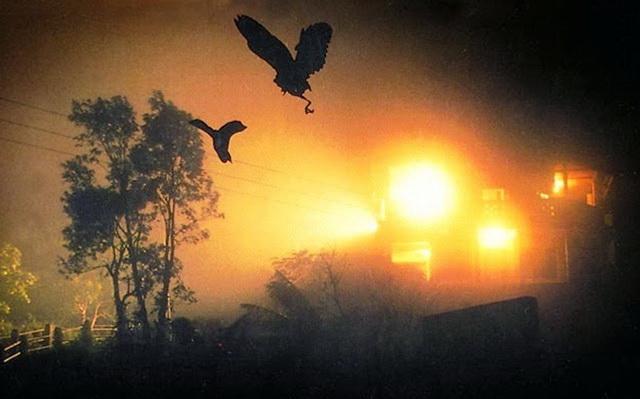 Ніч падаючих птахів в долині Джатінга