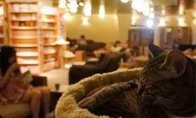 У Мадриді відкрилося котяче кафе