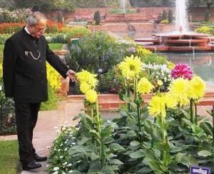 Могольскі сади в палаці Раштрапаті Бхаван в Нью-Делі відкриті для відвідування