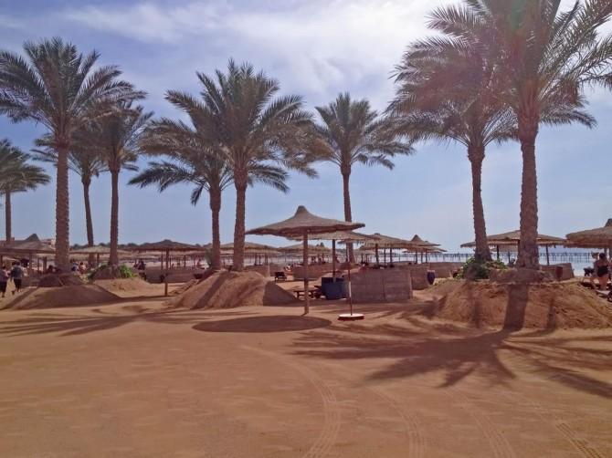 пальми на пляжах Єгипту