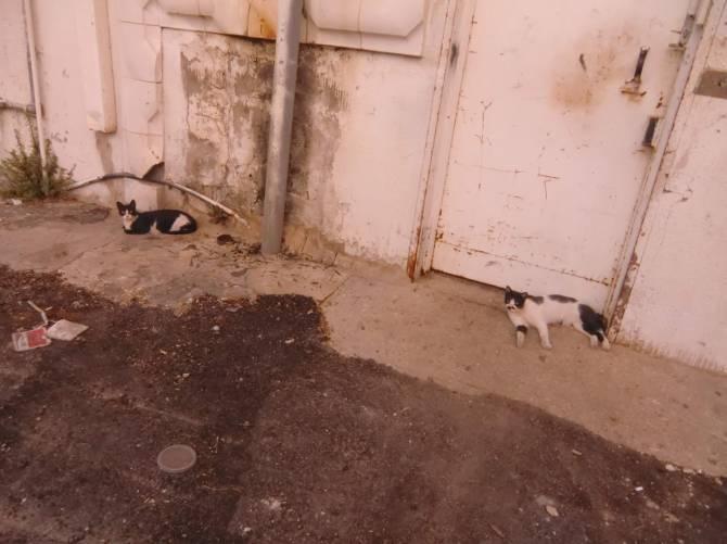 кішки Тель-Авіва