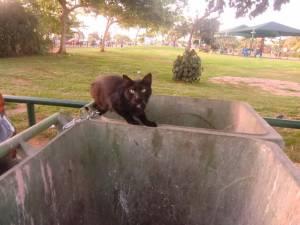 Пам'ятки Тель-Авіва : Кішки