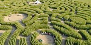 кукурудзяний лабіринт у Бельгії
