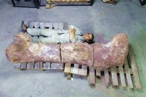 У Аргентині знайшли кістки семи величезних динозаврів