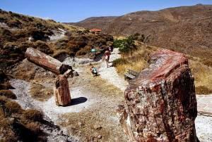 У список ЮНЕСКО може потрапити скам'янілий ліс грецького Лесбосу
