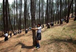 От як в Непалі обіймали дерева