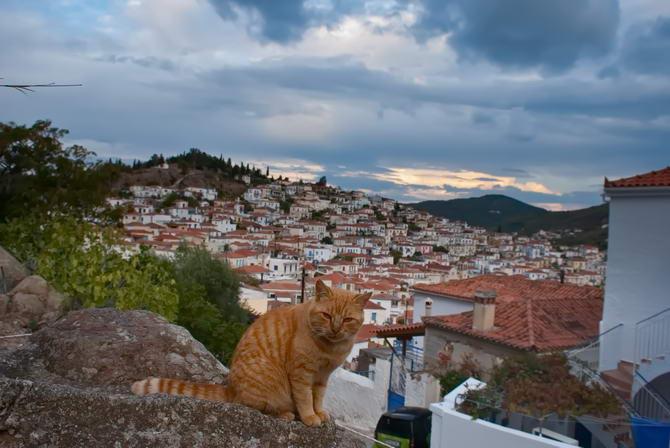 Рижий кіт на острові Порос