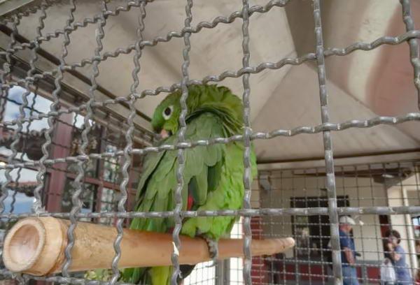 папуга Макс