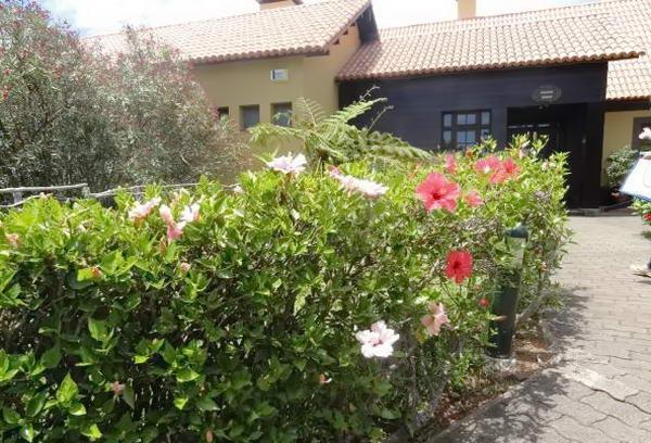 кущ китайської троянди