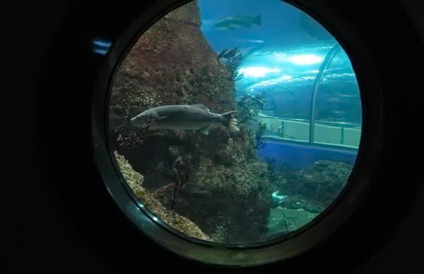 Океанаріум Барселони