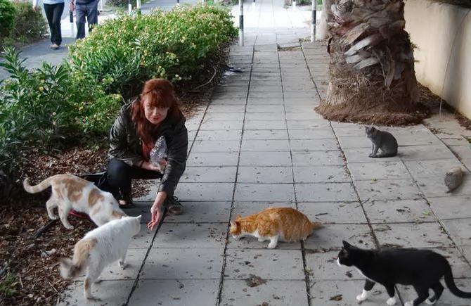кішки в місті Пафос