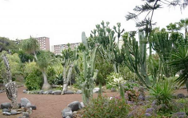 Сад біля пляжу