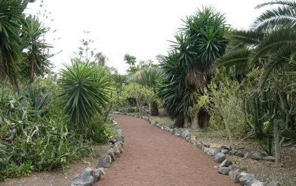 алеї кактусового саду