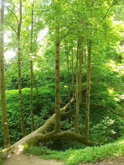 Ботанічний сад Батумі