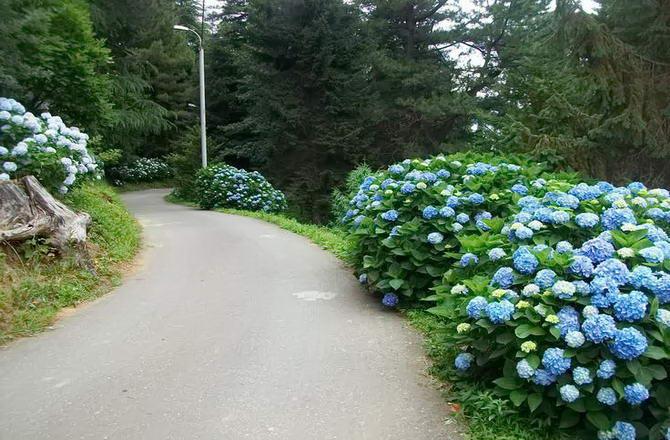 алеї ботанічного саду