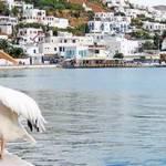 Греція і Міконос – *переможці* цього літа, згідно Observer