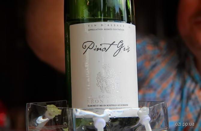 біле вино Піно Грі