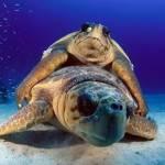 Про занурення з аквалангом, дайвінг