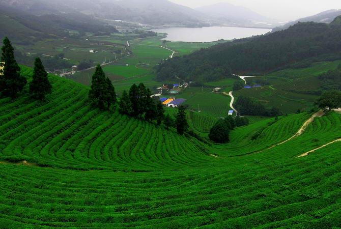 поля Южной Кореи