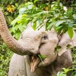 Національний парк Кхауяй в Таїланді