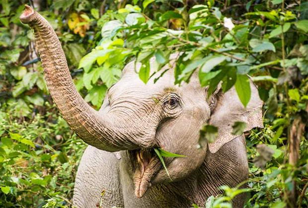 Національний парк в Таїланді