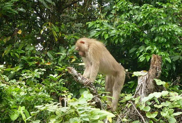 Національний парк Кхауяй