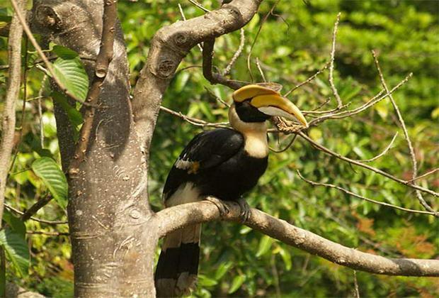 парк Кхауяй в Таїланді