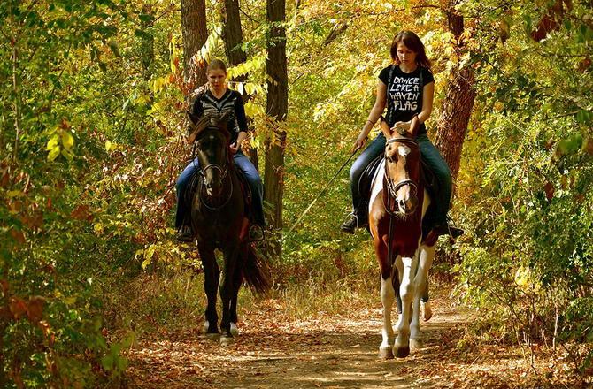 Прогулянки на конях по лісу