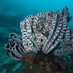 У Таїланді для відвідування туристами відкрився морський заповідник
