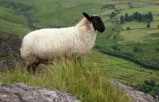 природа Ірландії