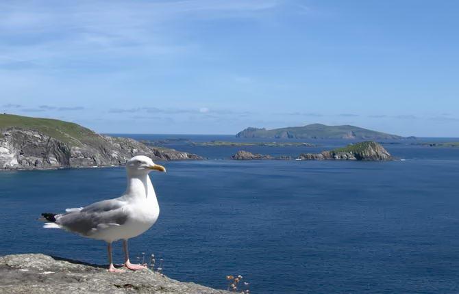 природа острову Ірландія
