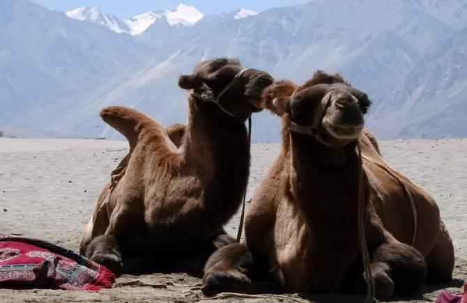 подорож на верблюдах в пустелю