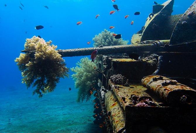 підводне плавання біля берегів Акаби