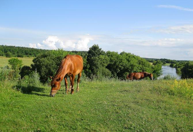 Зелёный туризм. Лошади на прогулке