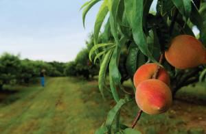 выращивание садовых культур