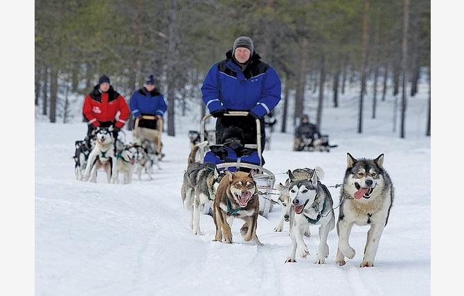 Поїздка на собачих упряжках