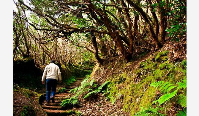 Лавровий ліс на острові Тенеріфе