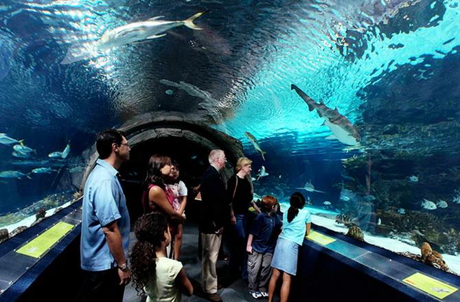 міський акваріум Хургади