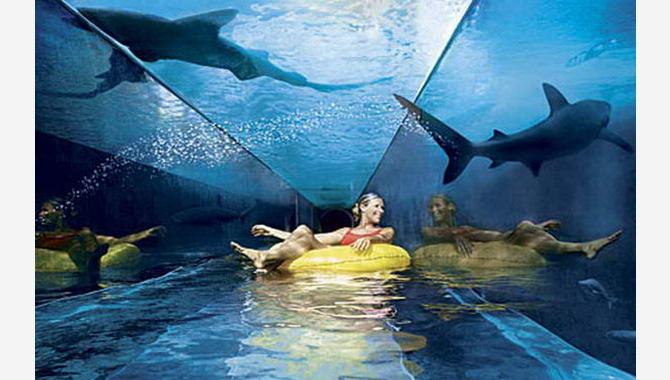 спуск повз акул в аквапарку Aquaventure