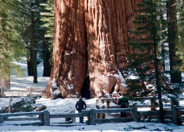 Найбільше дерево на Землі