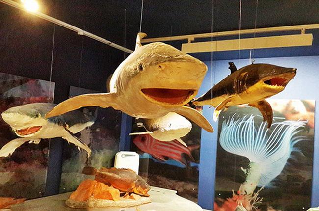 музей морського життя