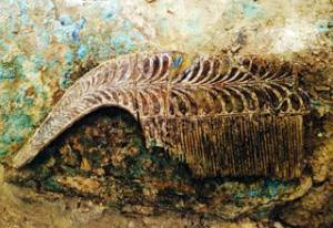 У Пілосі виявлено незаймане древнє поховання воїна
