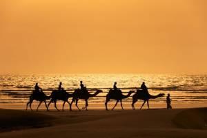 прогулянки на верблюдах вздовж узбережжя Марокко