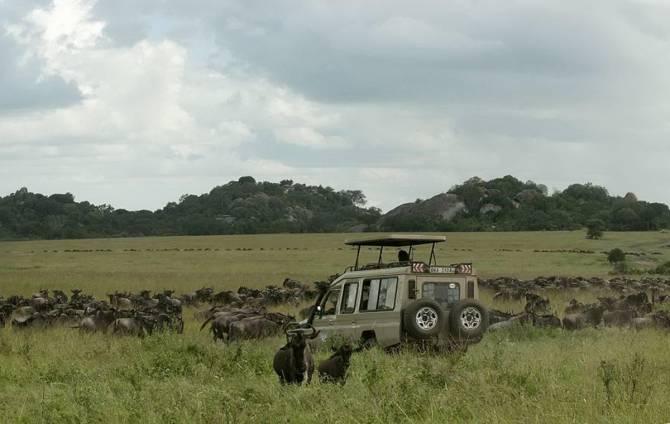 Танзания. Национальный заповедник Серенгети