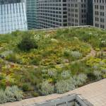 Озеленение крыш
