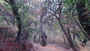 Індія. Національний парк Джим-Корбетт