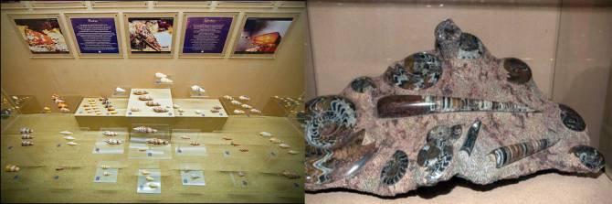 музей морських ракушок на Пхукеті