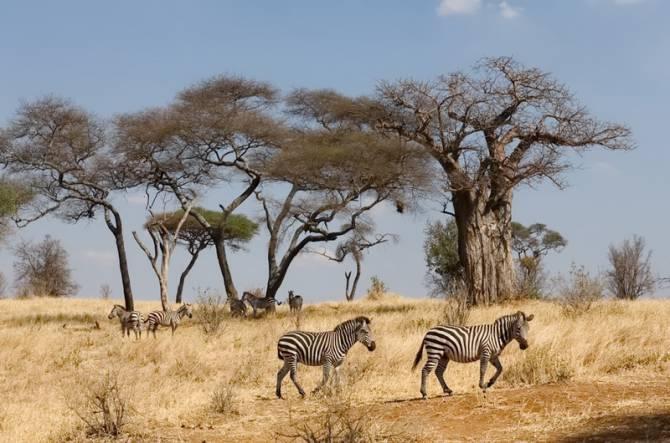 Північна Танзанія (Східна Африка)