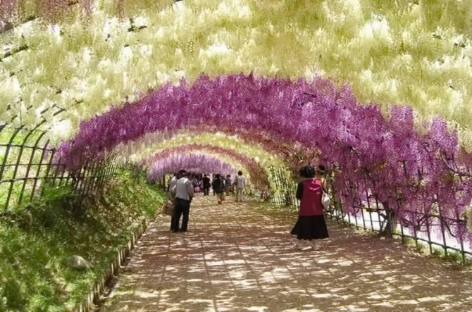 Сад Каваті Фудзі (Японія)